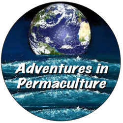 Adventures in Permaculture
